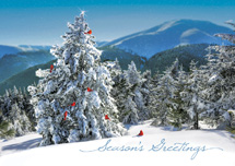 Fresh View Holiday Greeting Cards